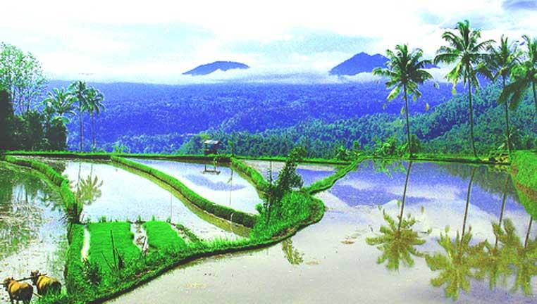 Bali World Heritage Tours, Jatiluwih rice