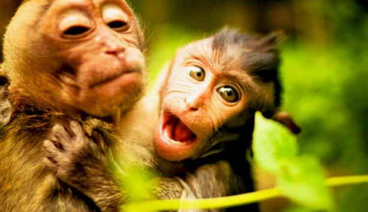 Ubud Monkey Forest, Bali tours, Bali Hiking