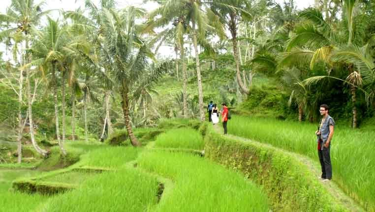 bali hiking, bali eco walk, ubud eco walk