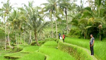 Rice Field, Bali Hiking