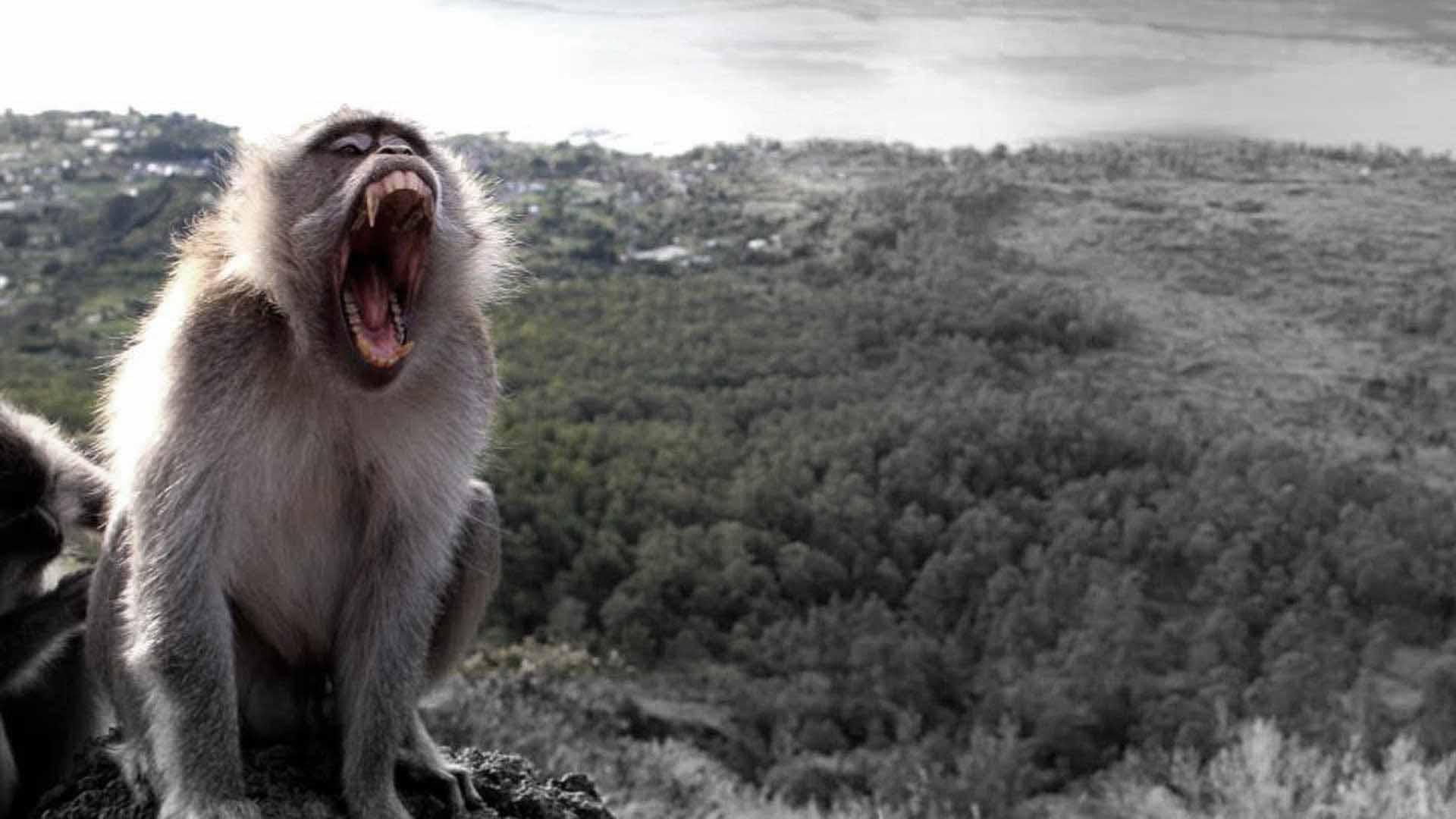 feeding-monkey